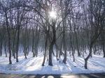 Alb si negru 2 Soare iarna Romania