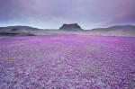Violet 5a