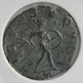 Aureolus r